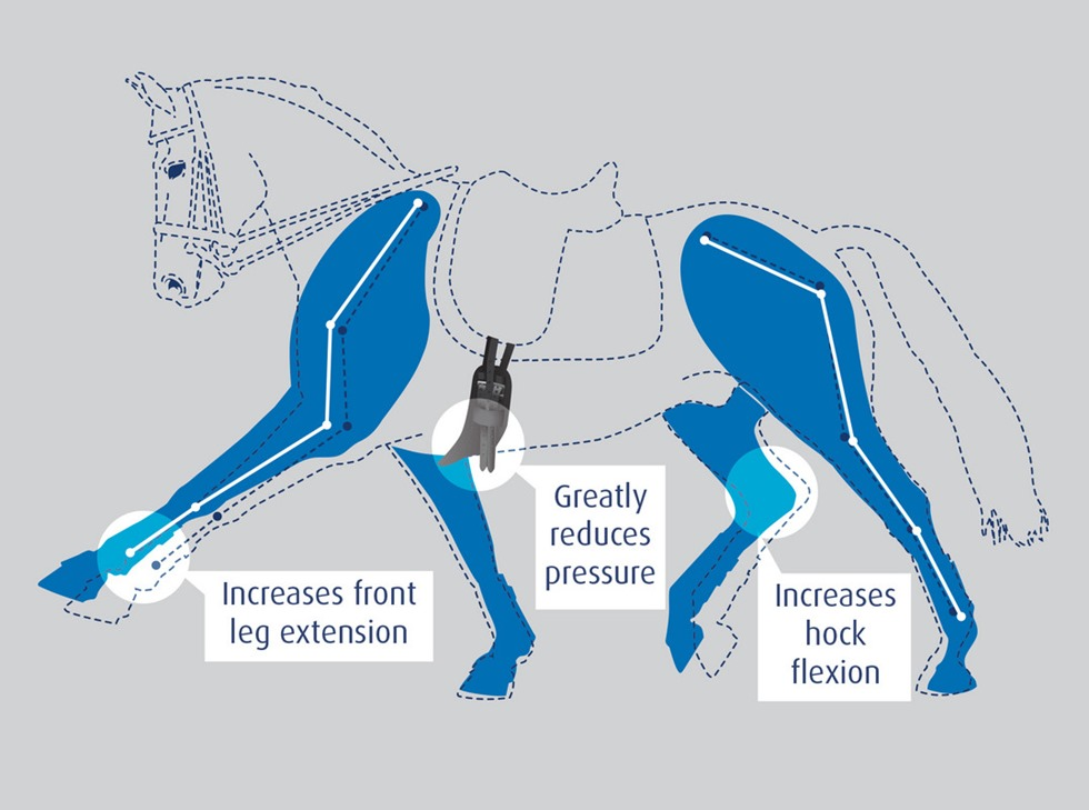 Prolite Horse Diagram