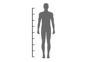 body measurement